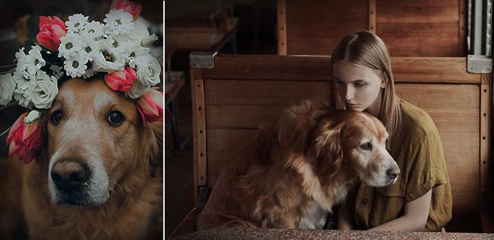 фото Когда собака — член семьи