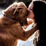 Когда собака полноценный член семьи